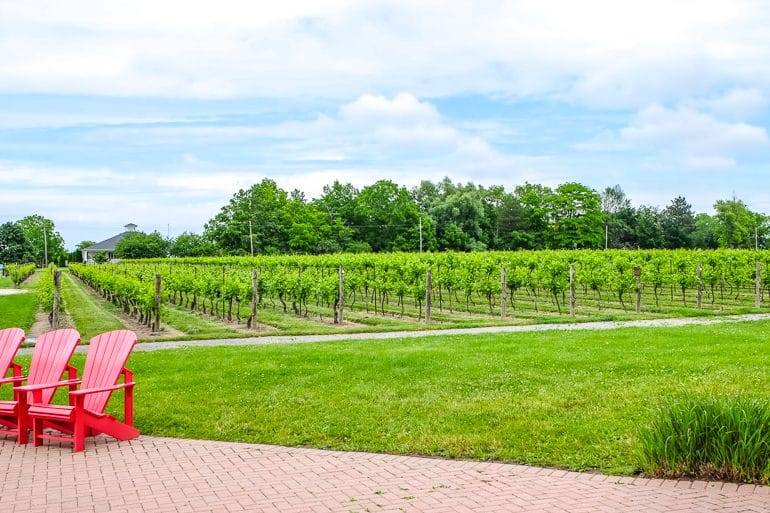two red muskoka chairs with green vineyards behind at inniskillin niagara on the lake winery