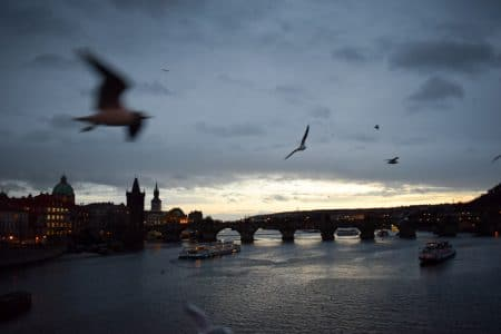 seagull flying through photo of prague at night on the water