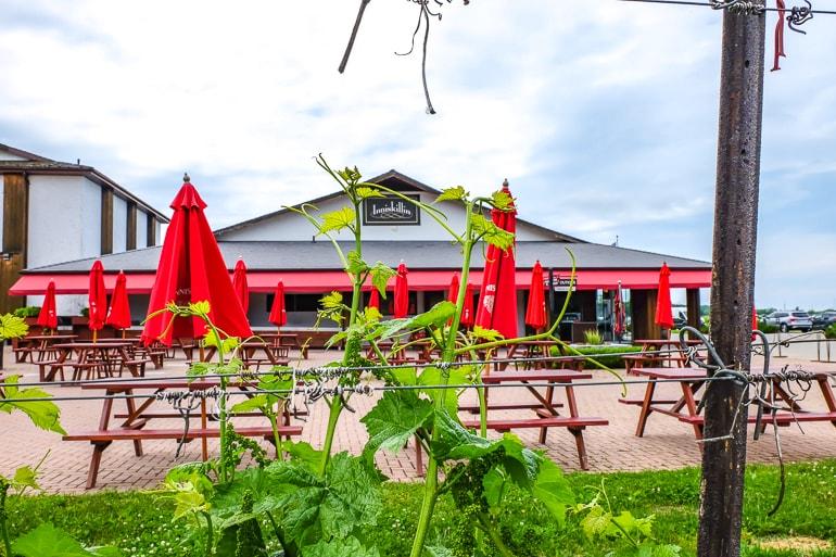 Gebäude mit roten Sonnenschirmen durch grüne Weinreben fotografiert bei Inniskillin Weingut