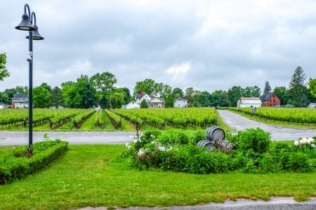 green vineyards with barrels and laneway in front niagara on the lake winery
