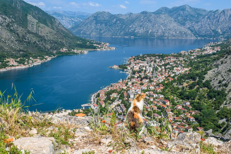 orange and white cat on cliff overlooking bay of kotor things to do in kotor