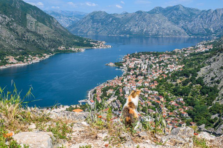 Orange-weiße Katze schaut über Bucht von Kotor Montenegro