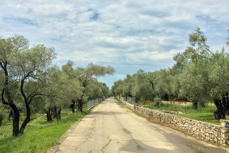 grave, road through olive tree forest things to do in ulcinj