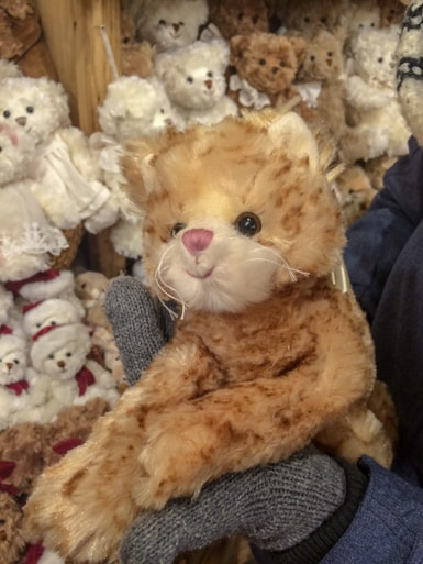 stuffed cat in toy store in krakow 3 days in krakow