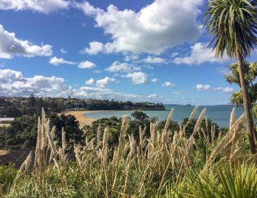 sandy bay with palm trees things to do in new zealand