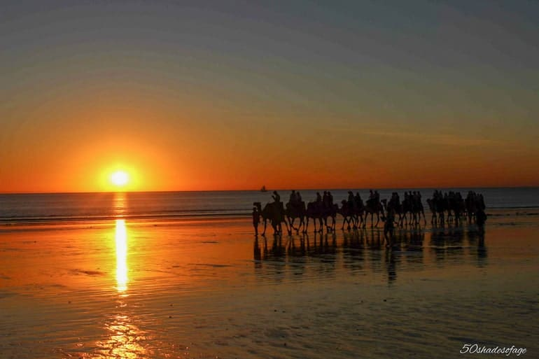 Camels on beach with water at sunset with orange sky