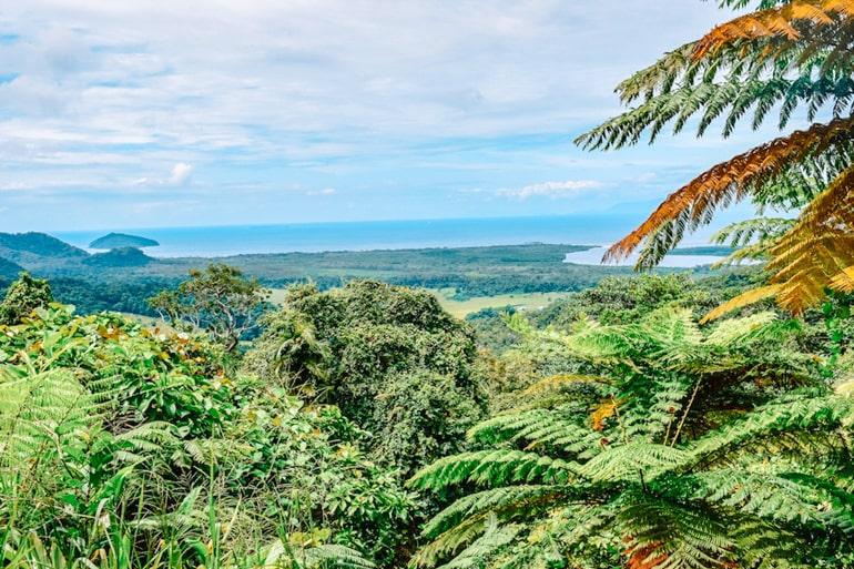 Grüne Bäume und blauer Himmel Daintree Regenwald Australien