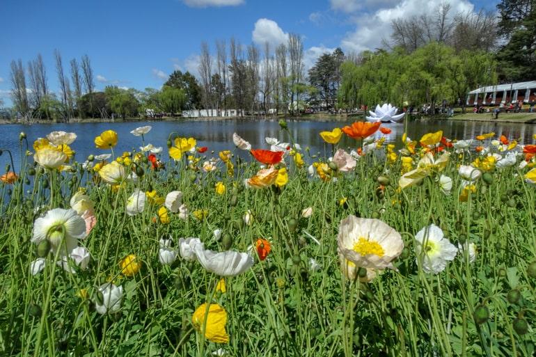 Grünes Gras mit Blumen und See im Hintergrund Floriade Canberra