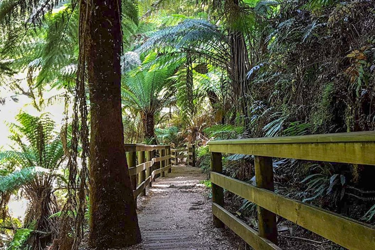 Bäume und Holzweg great otway nationalpark Australien