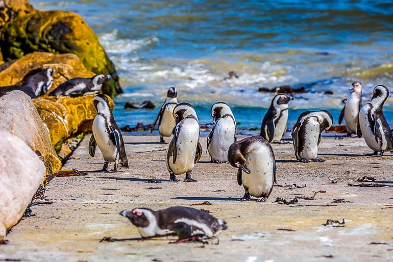 penguins with beach and waves behind experiences of a lifetime