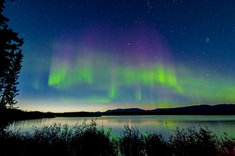 green northern lights over lake with trees in front lake laberge yukon canada