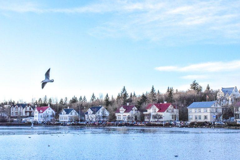 Bunte Häuser Rande des Sees mit Vögeln Wo übernachten Reykjavik