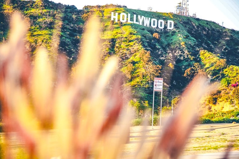 white hollywood sign through brush in setting sun