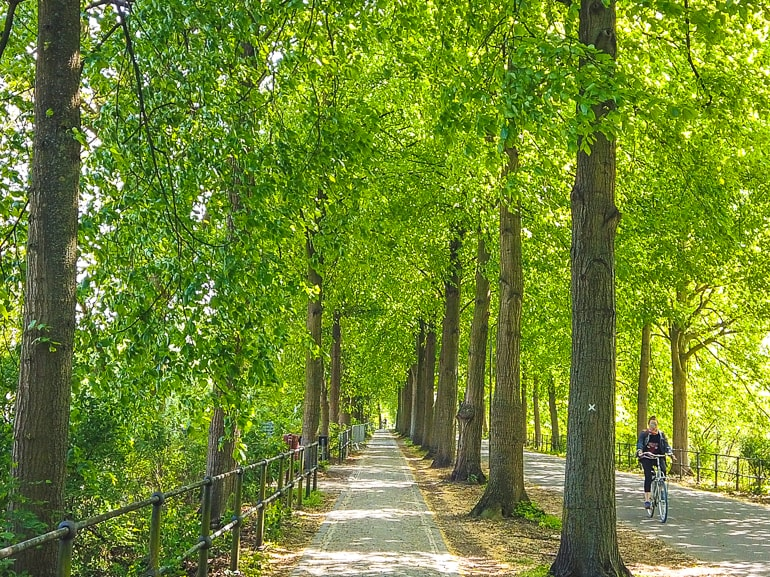 sidewalk with trees covering pathway things to do in munster germany