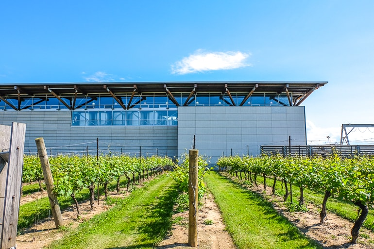 metal winery building with green vines in front niagara on the lake canada