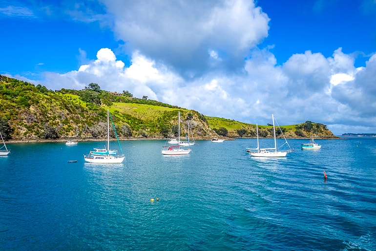 white sail boats in water with green land behind waiheke island new zealand