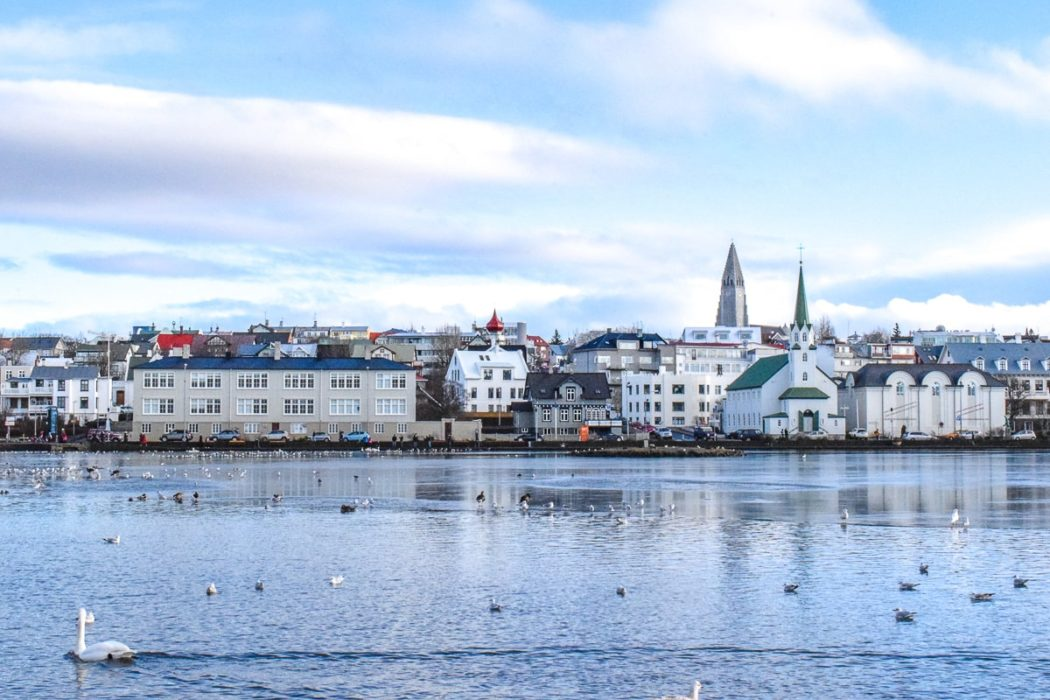 swan swimming in lake with large church and buildings behind one day in reykjavik