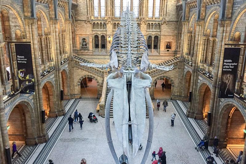 großes Skelett eines Wals im Atrium eines Museums in London